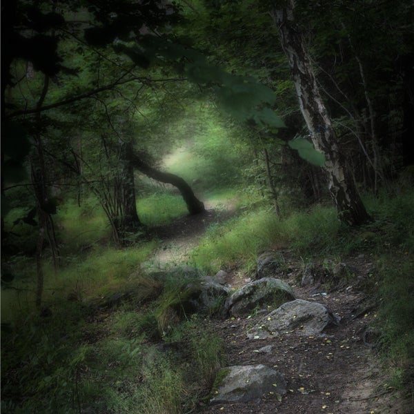 Image of En stig i skogen