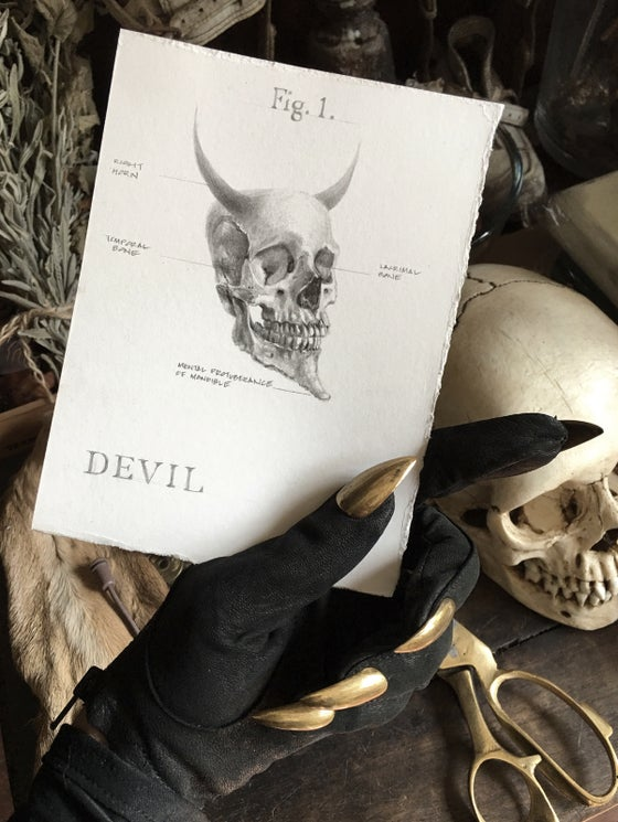 Image of Anatomy of a Devil