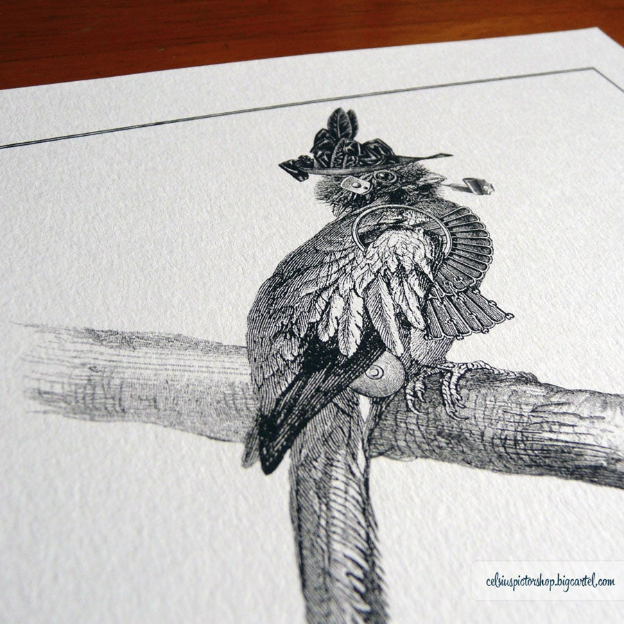 Image of Stylish bird