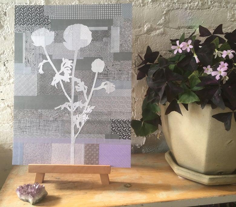 Image of Silk Lobby Ranunculus #02