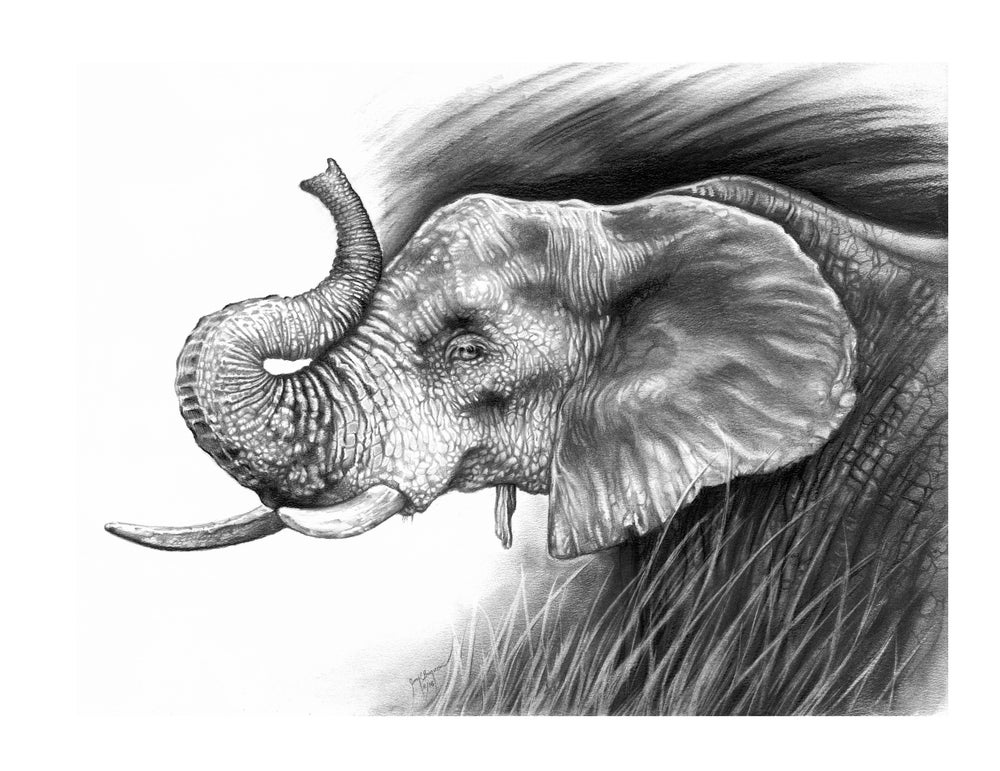 Image of Elephant in Charcoal - LIMITED or Unlimited Prints
