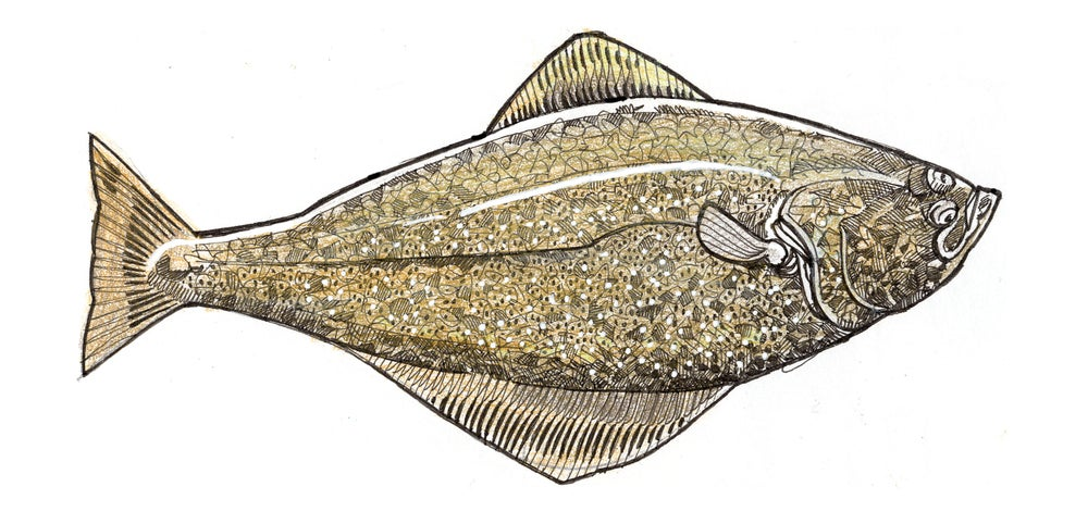 "Image of Halibut! 6"" X 12"""