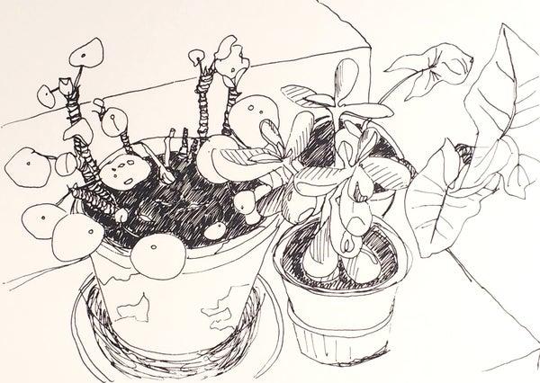 Image of Pot plants screen print