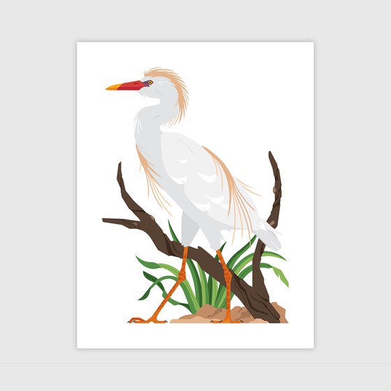 Image of Cattle Egret Print