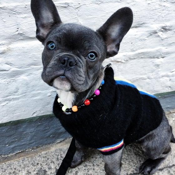 Image of Peggy ~ Black & Multi-Coloured Beaded Dog-Necklace