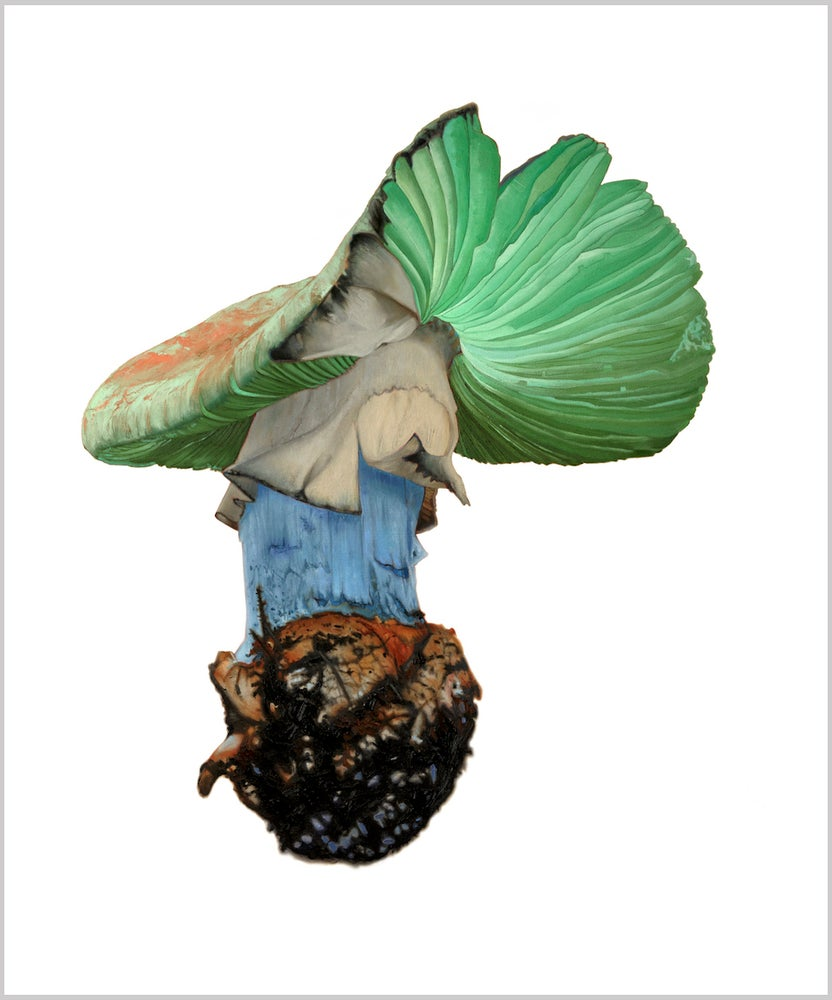 Image of Amanita Verde 20 x 16 inches Limited Edition of 10 Prints