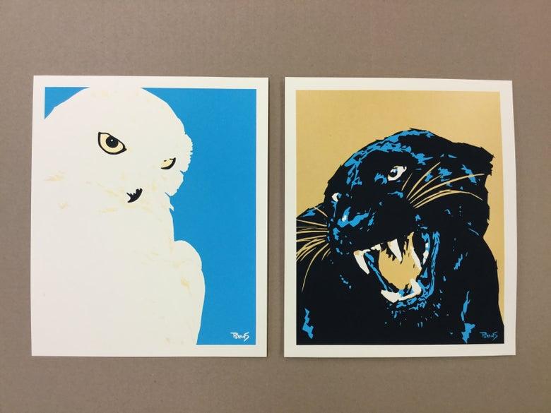 Image of Owl & Puma