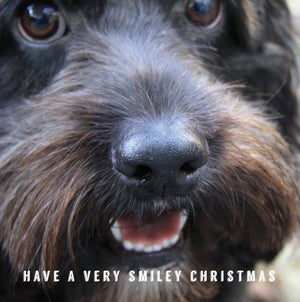 Image of Cockapoo Luvr Christmas Cards - Pack of 10 with envelopes