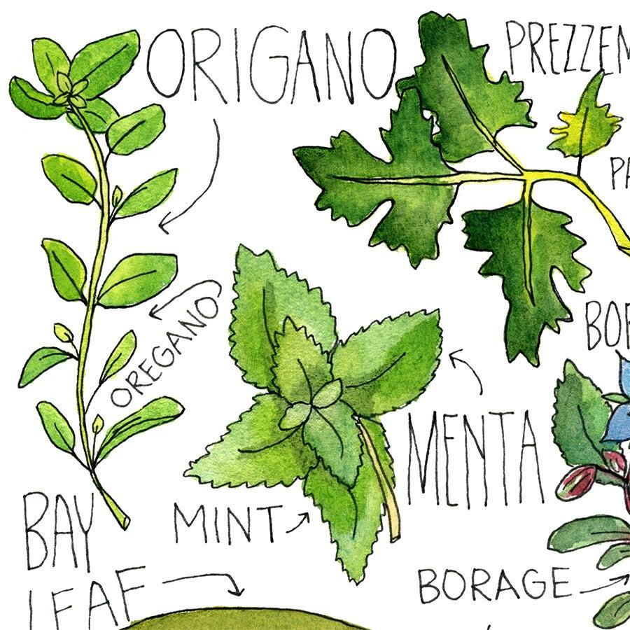 Image of Italian Herbs Print