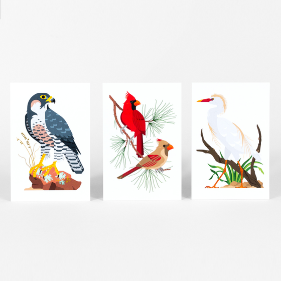 Image of Birds of Note Postcard Set