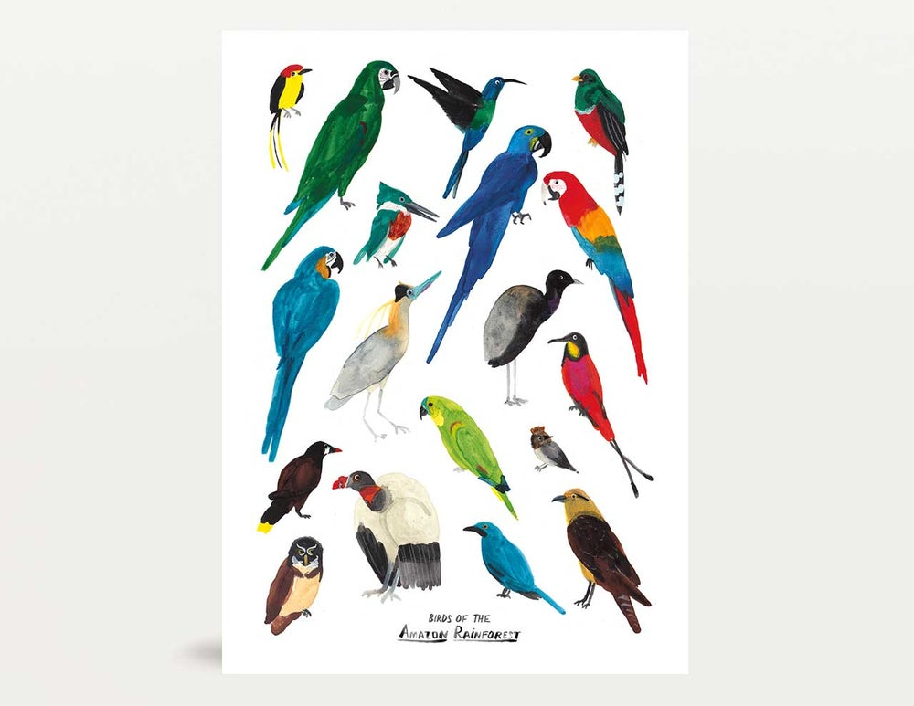Image of Birds of the Amazon