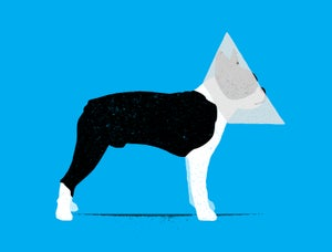 """Image of """"Cone of Shame"""""""