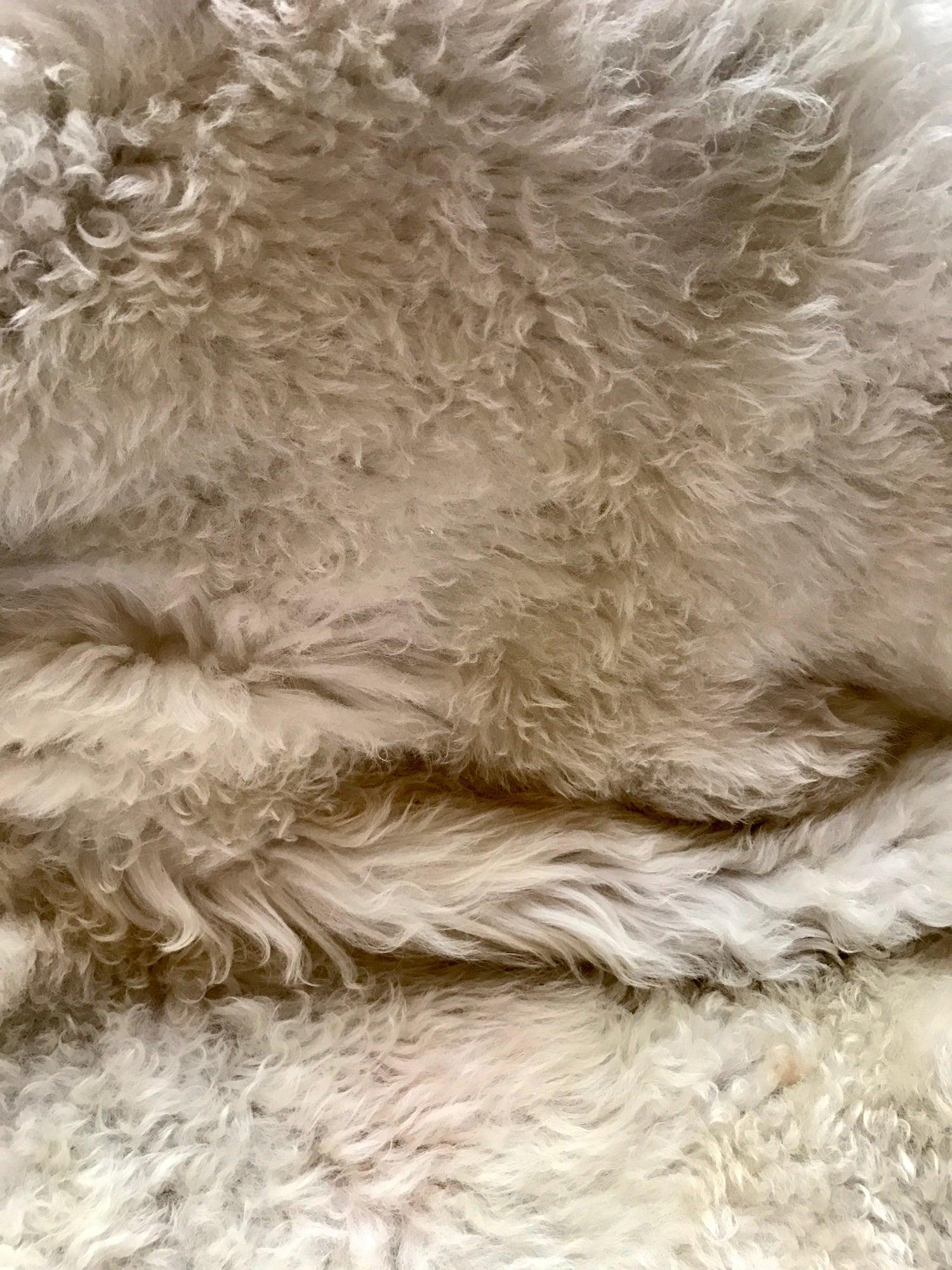 Image of Peau de mouton et lettre