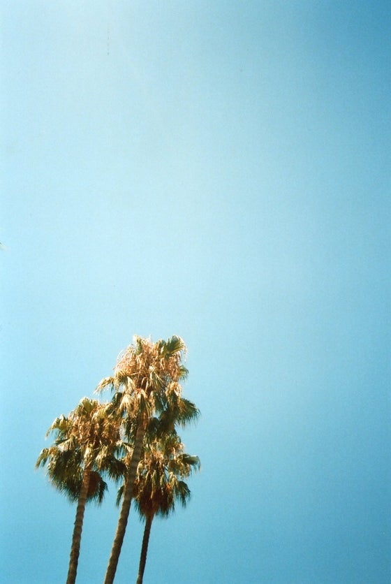 Image of Barcelona Palms