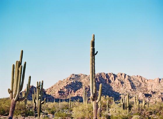 Image of Saguro cactus landscape