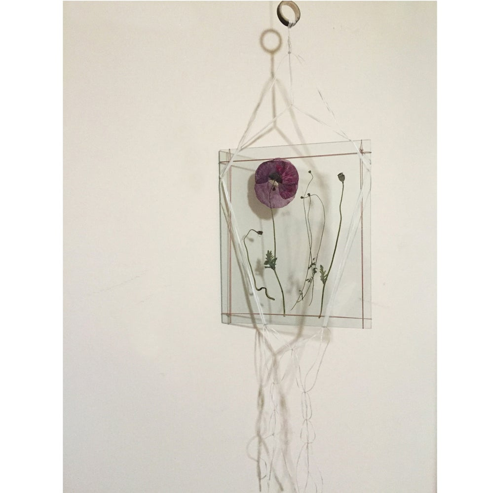 Image of Hanging glass plate with pressed poppy