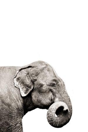 Image of Curly Trunk Elephant