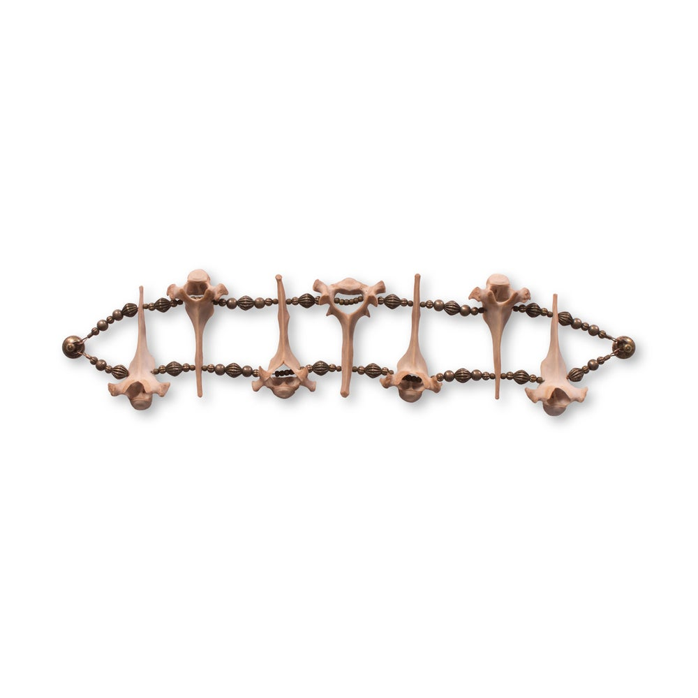 Image of Cat Vertebrae Bracelet
