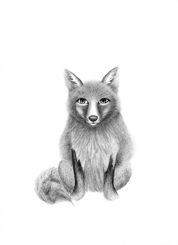 Image of Fox 1