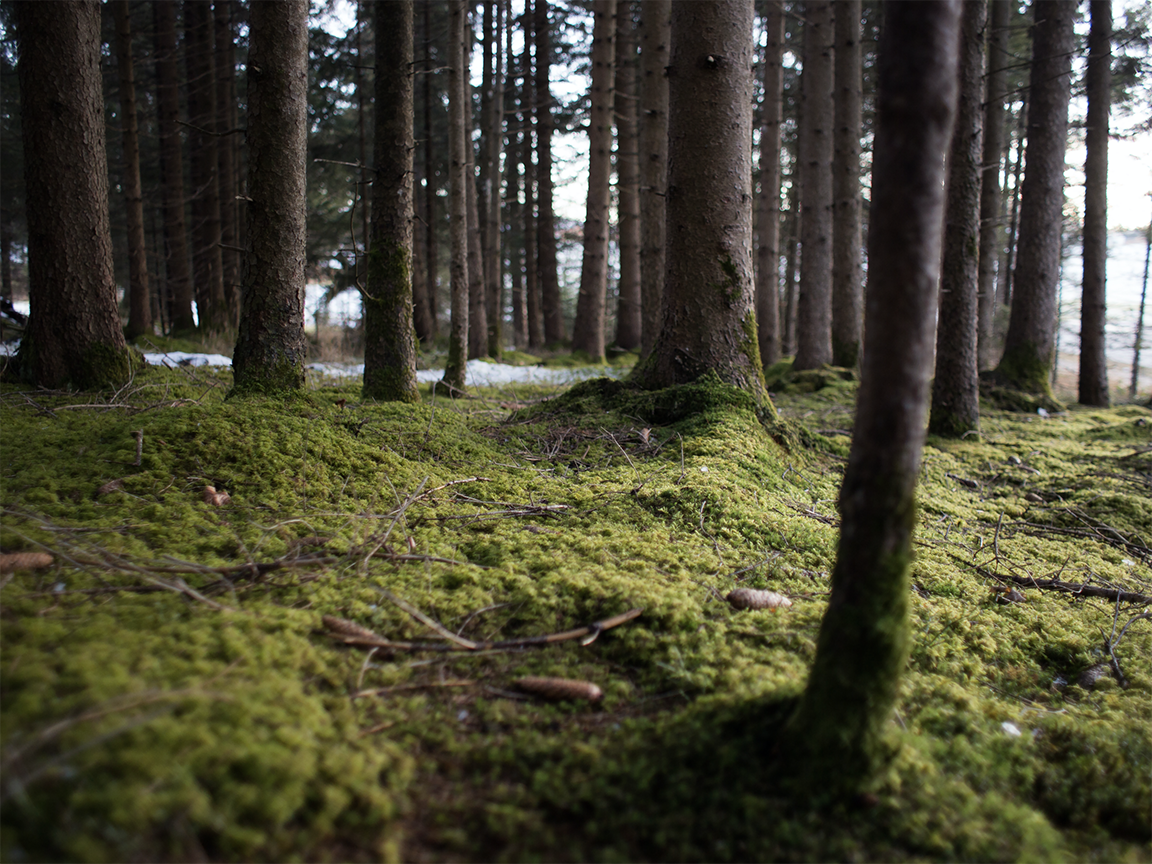 Image of Moss Forrest