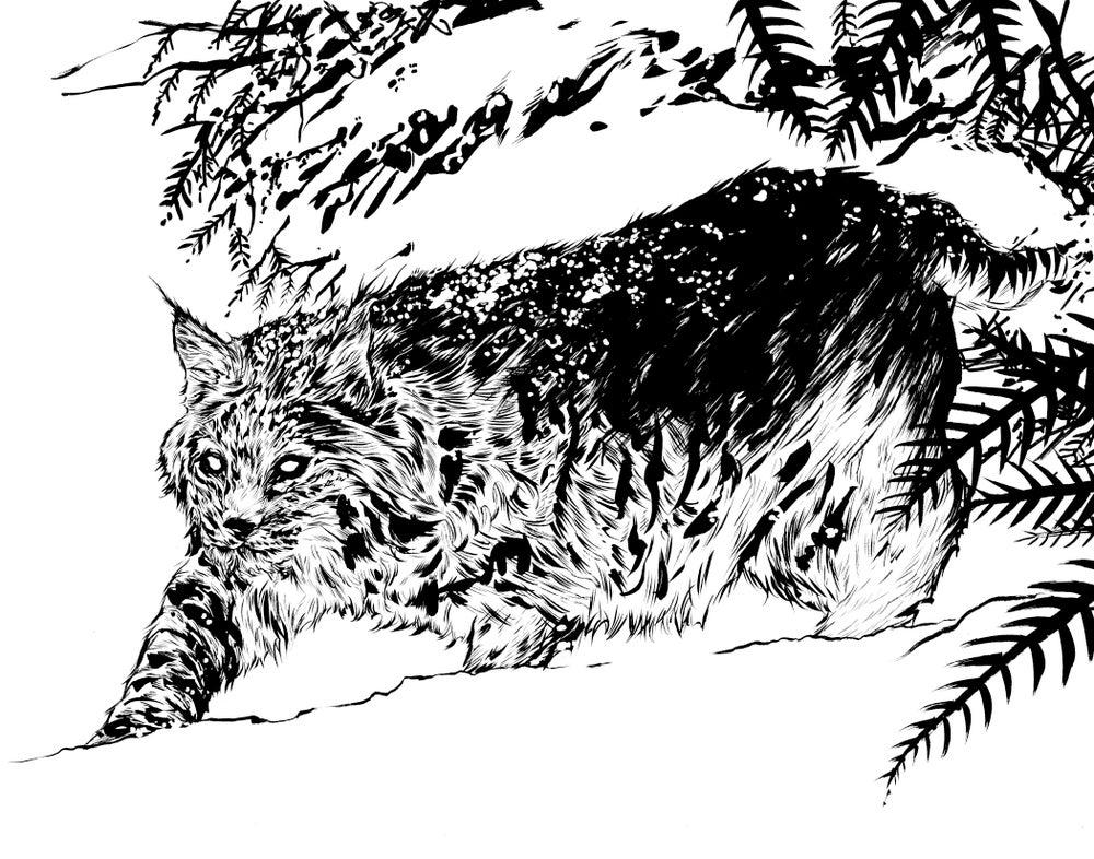 Image of inked bobcat original piece