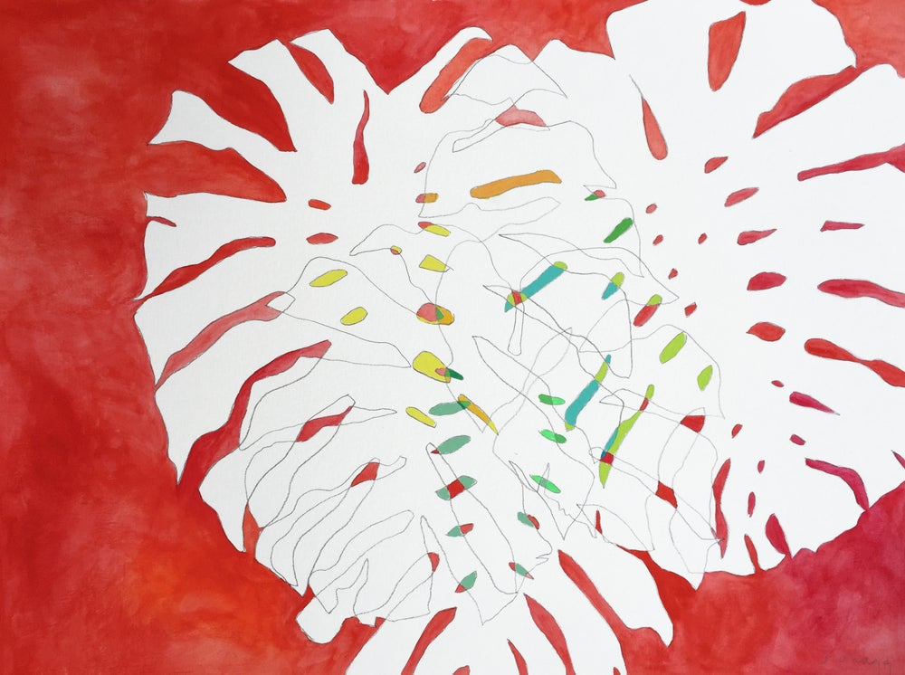 Image of Monstera No 42