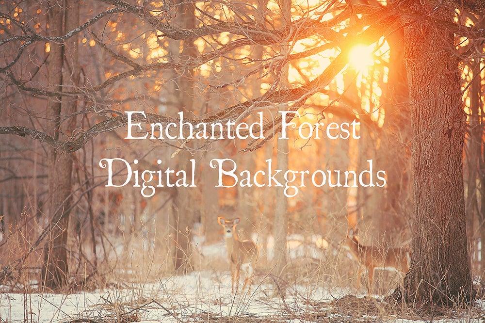 Image of Enchanted Forest Digital Backgrounds