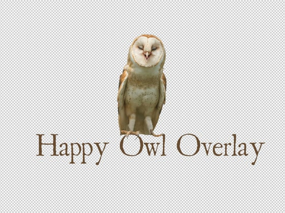 Image of Happy Owl Overlay