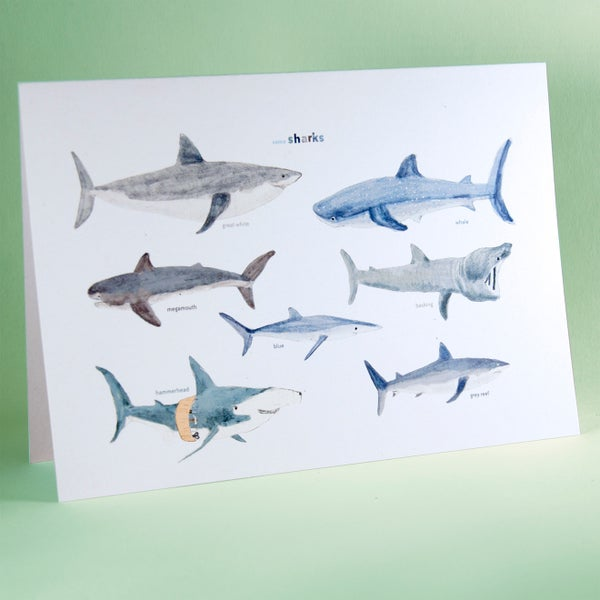 Image of Some Sharks Card