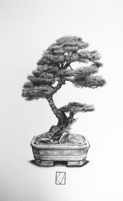 Image of Bonsai - A3 Print