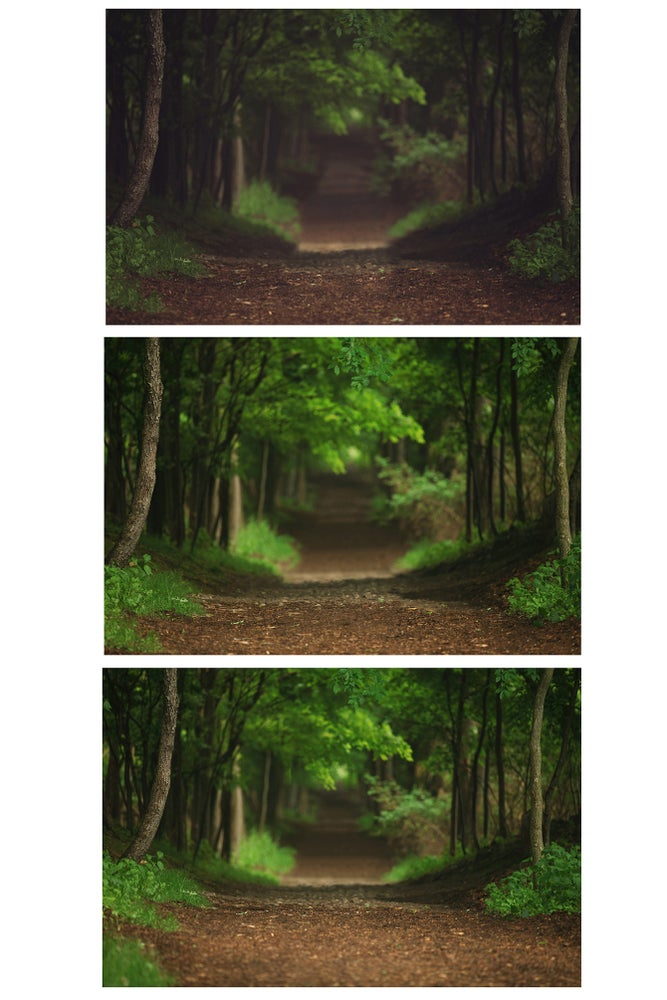 Image of Forest Path Digital Backgrounds