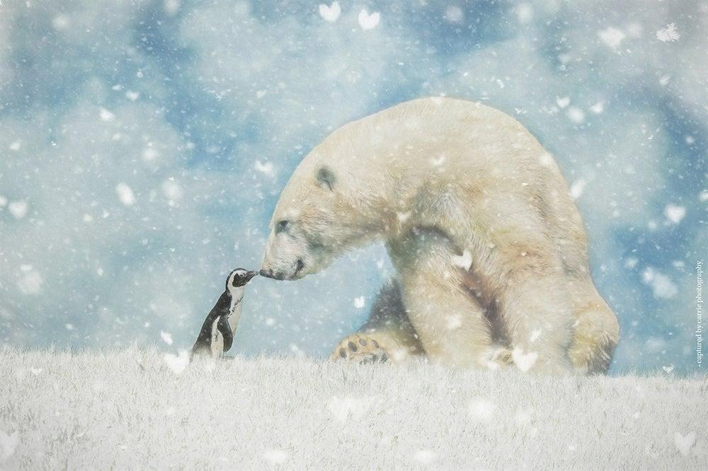Image of Penguins & Baby Polar Bears BUNDLE
