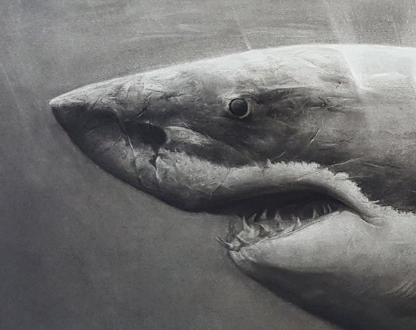 Image of Shark Original Drawing by Liu Ling
