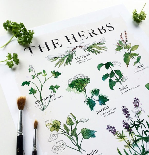 """Image of """"The Herbs"""""""