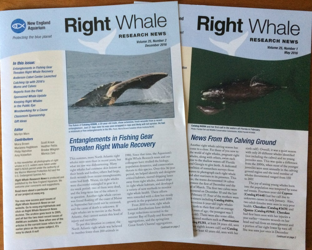 Image of Right Whale Research Newsletter