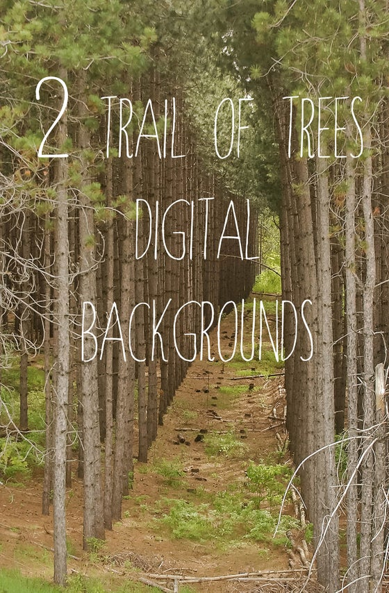 Image of Trail of Trees Digital Backgrounds