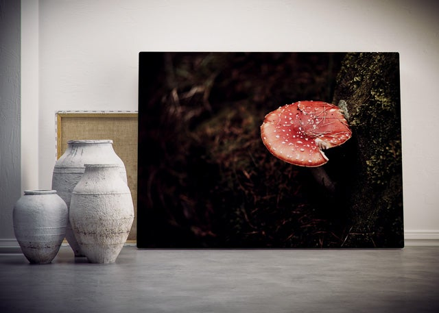 Image of Toadstool (Print)