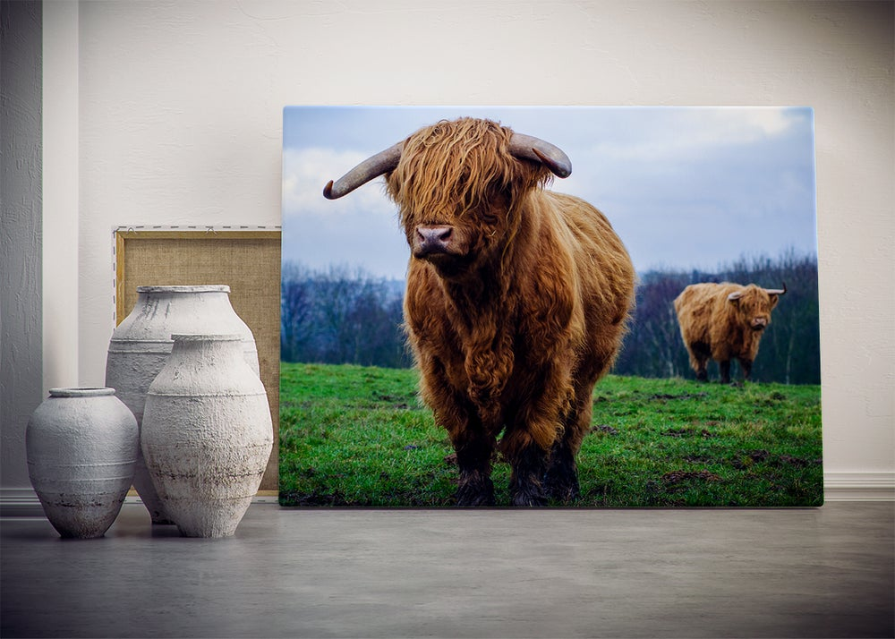Image of Loretta - The Highland Cow Landscape (Print)