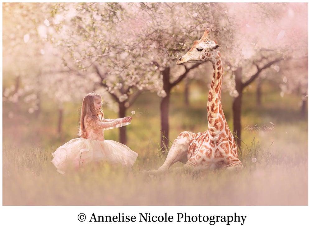 Image of Baby Giraffe Overlay
