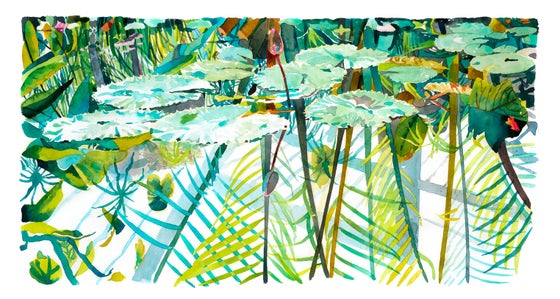 Image of The Lily Pond, Kew