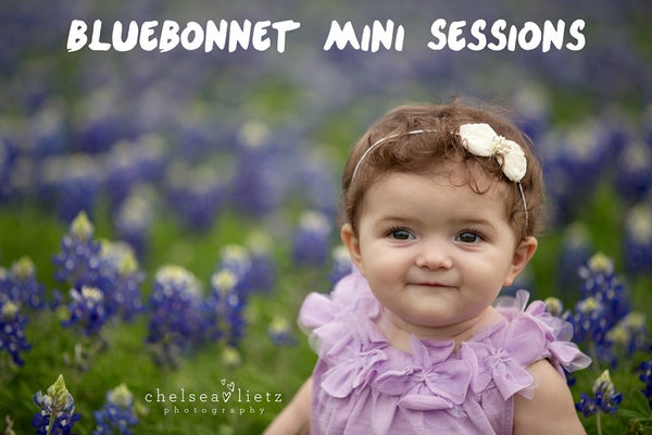 Image of Bluebonnet Mini Session