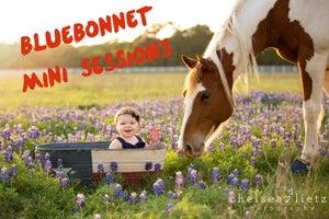 Image of Bluebonnet Mini Session