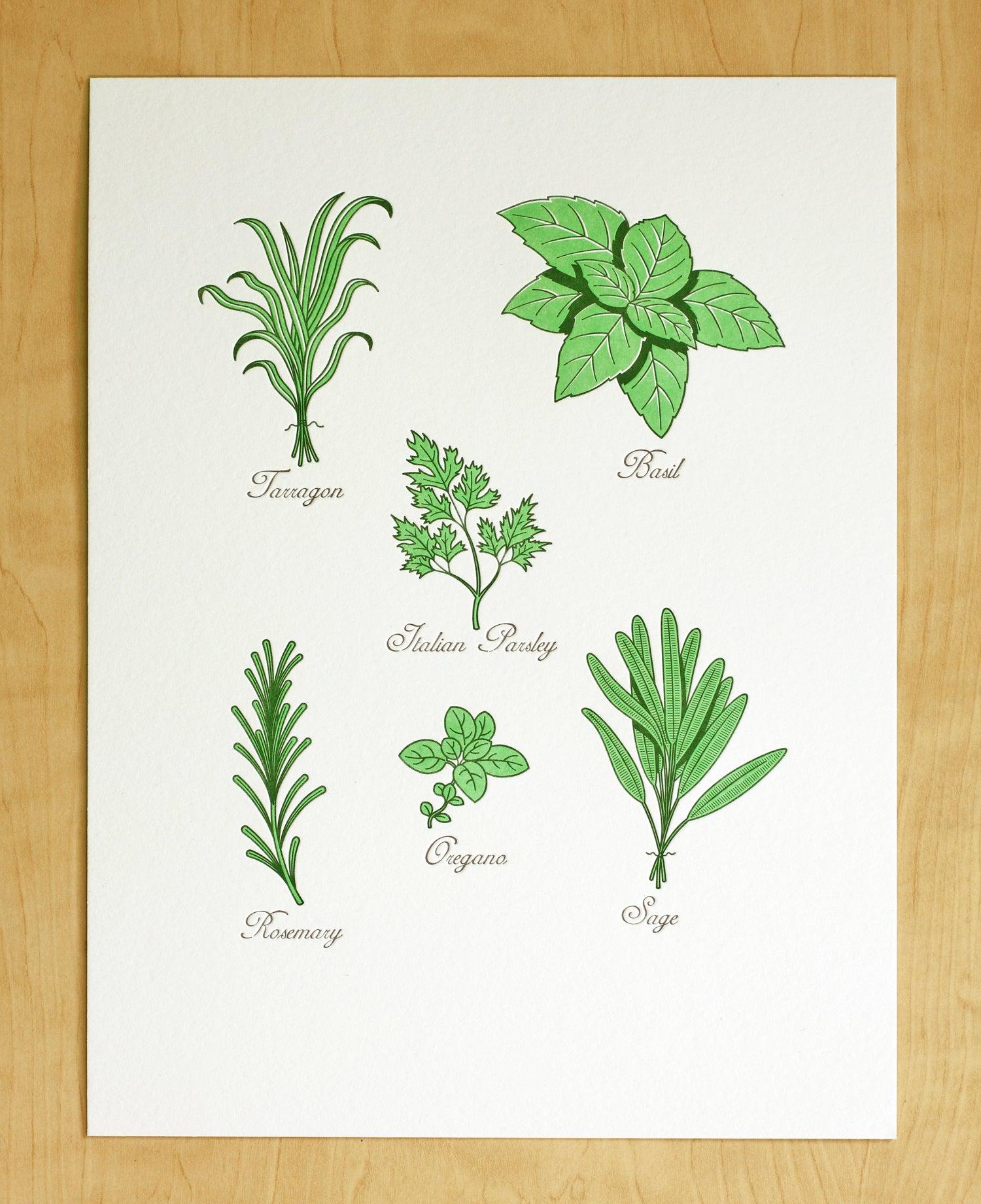 Image of GARDEN HERBS Print