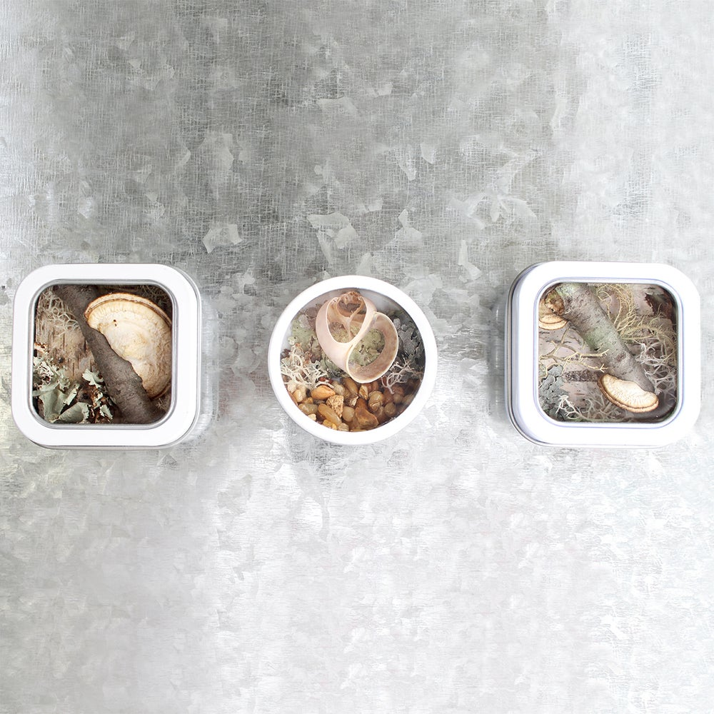 Image of Seashell Kitchen Art, River-themed Fridge Magnet