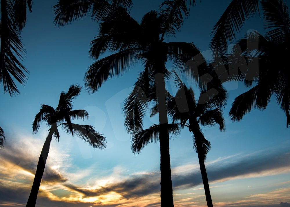 Image of PALM TREES