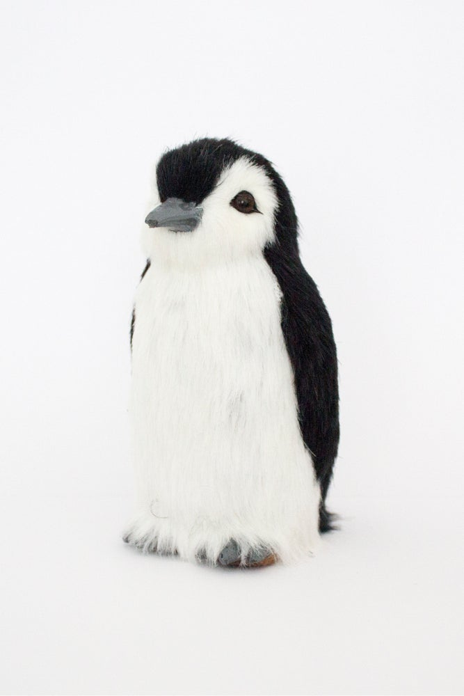 Image of Penguin Pets