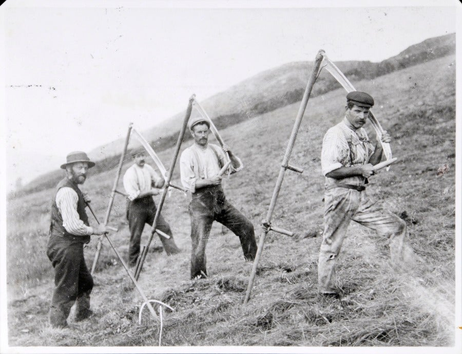 Image of Northern Scythe Championships Sunday 9th July