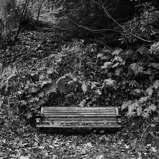 Image of Bench - Jesmond Dene