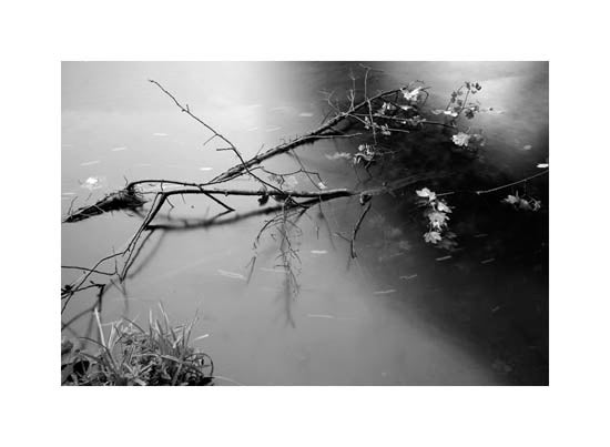 Image of Riverbank #2 - Wylam