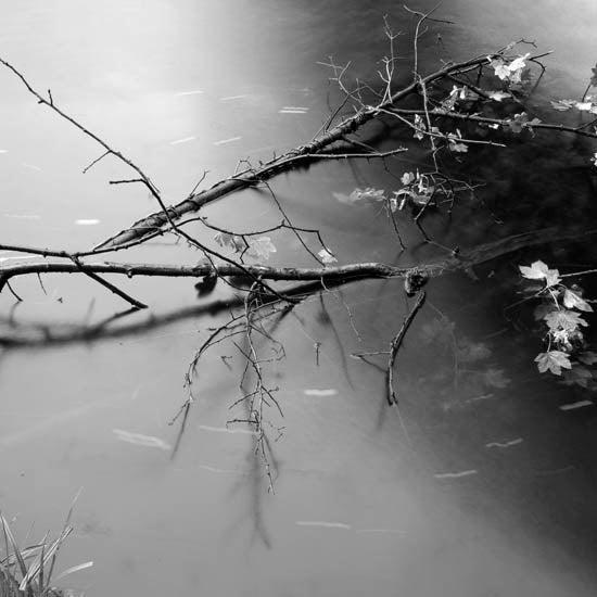 Image of Riverbank #2 - Wylam